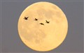 010 Ducks across the moon