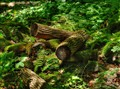 Crawford Lake Logs