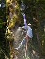 Pacific Northwest Tree Worker