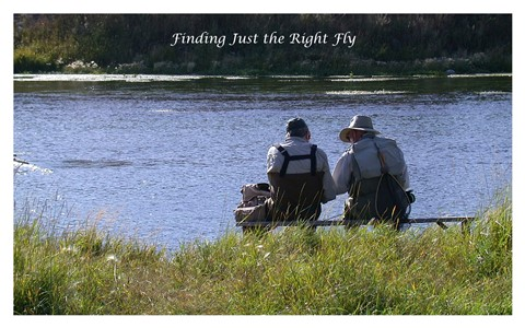 Finding Just the Right Fly