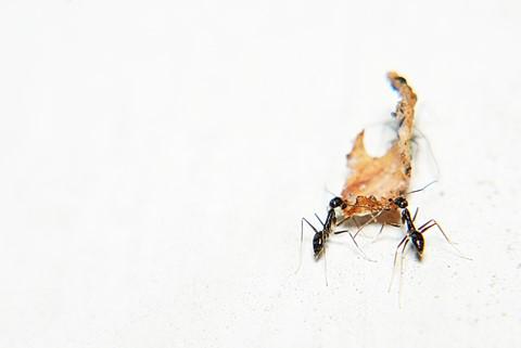 DPReview Ants 1600 Pixels