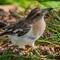 BUTCHER BIRD CRAMS FARM_4324email