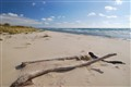 Forlorn Beach
