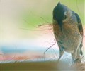 bird collecting nest stuff. - 20325