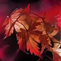 last autumn