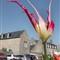 tulip1full