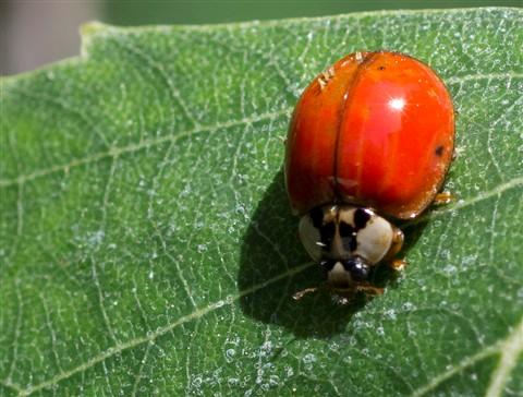 2012-05-17 Lady Bug 2 100%