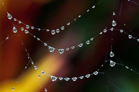 Nature's Jewellery