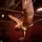 owldescending2b