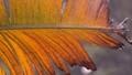 A beautiful dry leaf