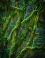 Hoe Rainforest, Washington St.