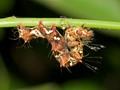 Enter your best caterpillar photograph