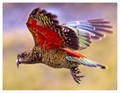 Kaleidoscopic Kleptomaniac Kea
