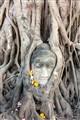 Banyan Buddha