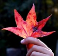 Took my grandson to Torreya State Park in northwest Florida to see his first-ever autumn leaf : )