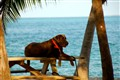Dog Days of Summer in Key West