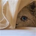 Sheet prowler