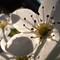 Spring Blossoms ©2013 Derek Dean