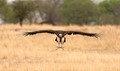 Vulture perfect landing