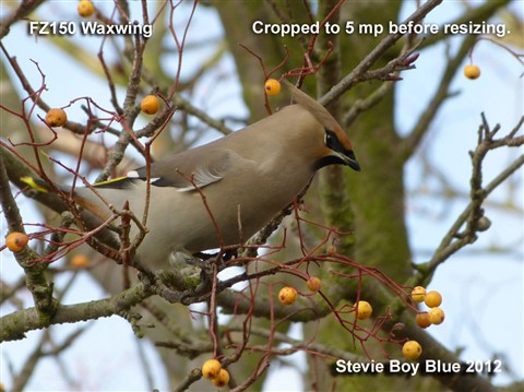 B Waxwing for DPR