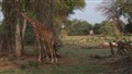 Serengeti Park in the morning