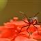 Bug Flower-6