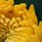 flower100crop