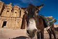 a curious donkey approaches me at the Monastery in Petra