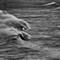 Johnshaven Stormy Seas 2012-12-23g