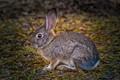 Bunny Rabbit-2324