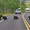 Mumma Bear and the Three Baby Bears
