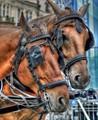 Prague Horses