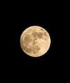 the Moon-1D