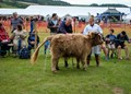 Highland Cattle Class at Rosedale Show, North Yorkshire.