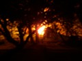 Bonfire Through Trees