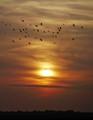 sunsetbchbirds