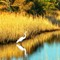Chincoteague Autumn