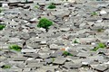 Rooftops - LiJiang Oldtown