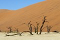 Dead trees, Orange Dunes, Namibia