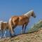 Horses in the wild, Dolomites, Italy