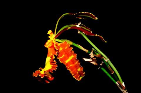 Orchids_091116_17_eds