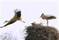 The stork mission