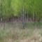 Woods in Holland SDIM0025