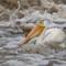 Pelican Foam
