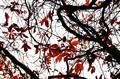 my japanese autumn