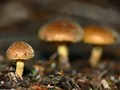 Macro Mushrooms
