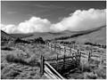 Highland - Paddock