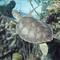 blackbeards bahamas liveaboard-180871