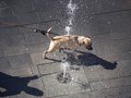 Dog loving the water fountains...