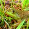 refections in a frogs eye